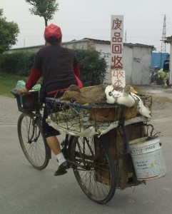 Patos en bici